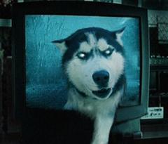 犬のおもしろ画像、写真