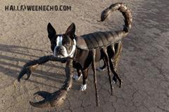 echo-scorpion-dog-costume.jpg
