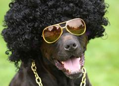 ファンキー犬