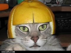 猫おもしろ写真